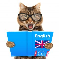 5 unconventional tips from professional translators